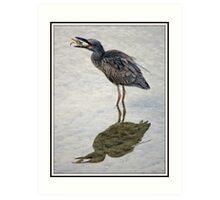 Juvenile Yellow Crowned Night Heron Art Print