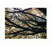Tree at Green Lake, Seattle, Washington Art Print