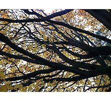 Tree at Green Lake, Seattle, Washington Photographic Print