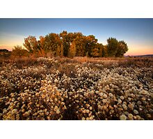 Autumn Crowds Photographic Print