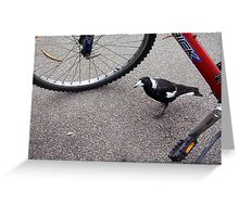 Magpie Peering - 04 11 12 Greeting Card