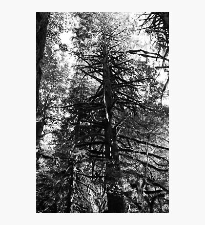 Mt. Baker National Forest Photographic Print