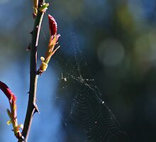 Just another fly in a web by Georgie Hart