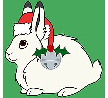White Arctic Hare with Santa Hat, Holly & Silver Bell Photographic Print