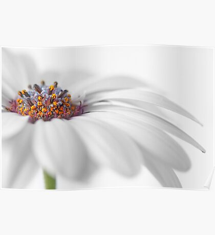 White daisy Poster