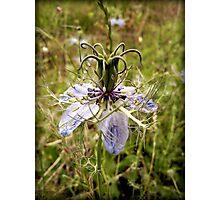 rare wild flower  Photographic Print