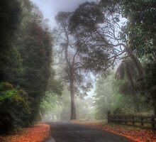 Church Lane - Mt Wilson NSW Australia by Brad Woodman