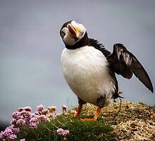Puffins (IV), Lunga Island, Scotland by JourneyPhotos