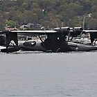 Catalina Taxiing In by bazcelt