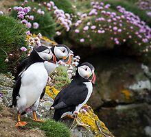 Puffins (IX), Lunga Island, Scotland by JourneyPhotos