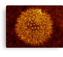 Dandelion Amber Glow Canvas Print