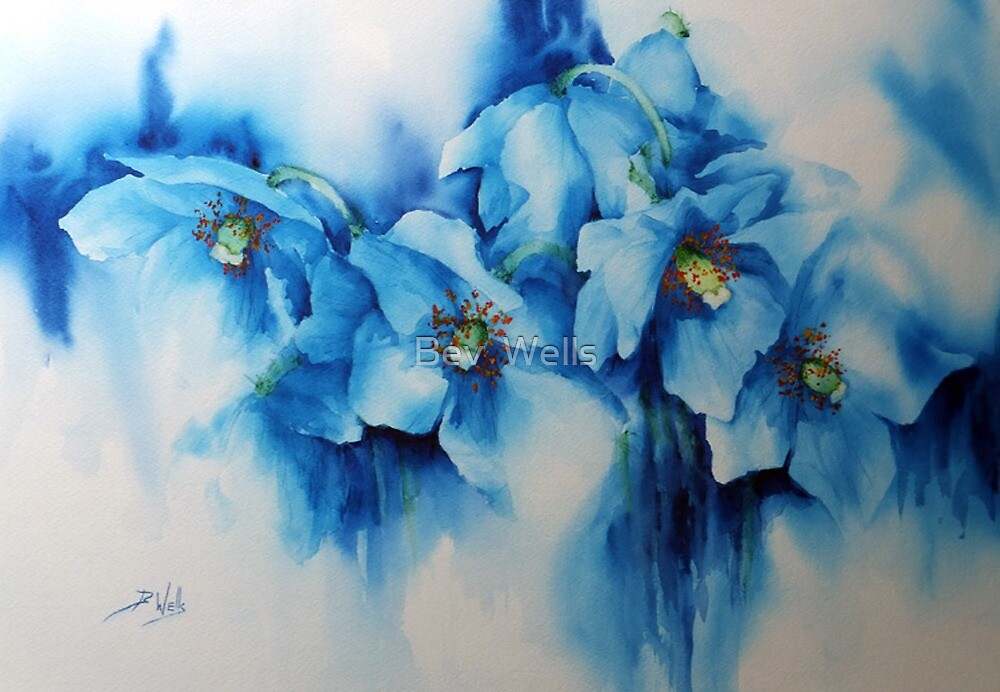 Meconopsis by Bev  Wells