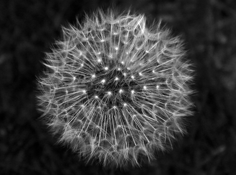 Dandelion Dream by DavidWHughes