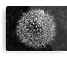 Dandelion Dream Metal Print