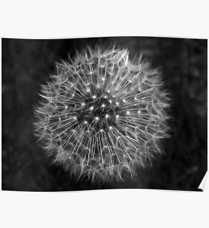 Dandelion Dream Poster