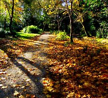 Autumn woodland path. by Finbarr Reilly