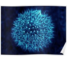 Dandelion Ink Blue Poster