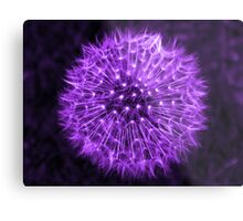 Dandelion Lavender Metal Print