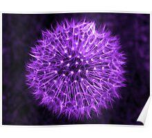 Dandelion Lavender Poster