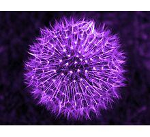 Dandelion Lavender Photographic Print