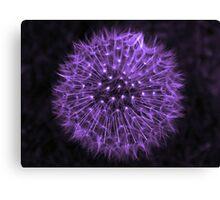 Dandelion Purple Canvas Print