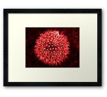 Dandelion Red Framed Print