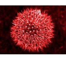 Dandelion Red Photographic Print