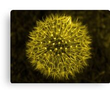 Dandelion Yellow Canvas Print