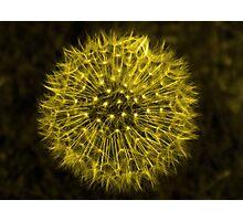 Dandelion Yellow Photographic Print