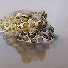 Toad Love by Istvan Natart