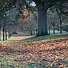 Autumn Avenue by Astrid Ewing Photography