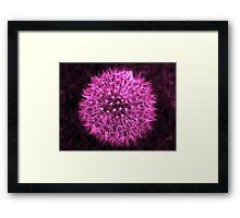 Dandelion Violet Framed Print