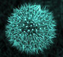 Dandelion Aqua by DavidWHughes