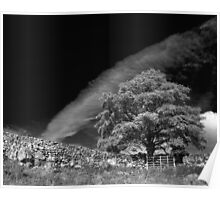 Dramatic tree, Yorkshire Dales Poster