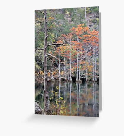 Autumn In The Cypress Swamp Greeting Card