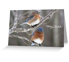Mr. & Mrs. Eastern Bluebird -- Merry Christmas Greeting Card