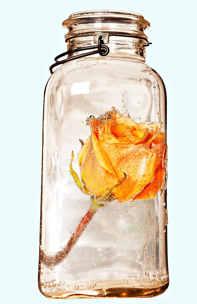Jar and Flower by PhotogeekArt