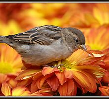 Sparrows Love Mums by Mikell Herrick