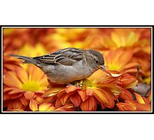 Sparrows Love Mums Photographic Print