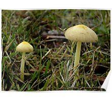 Older Yellow Mushrooms Poster