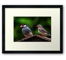 Una bella coppia di Padda Framed Print