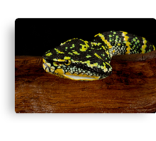 The angry viper Canvas Print