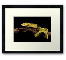 The yellow python Framed Print
