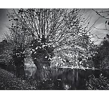 Ghost in the willow Photographic Print