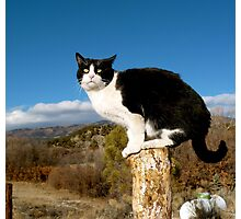 Licorice Cat | Gardner, CO USA Photographic Print