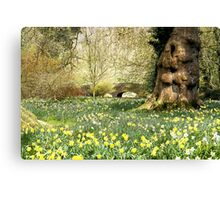 English spring daffodils Canvas Print