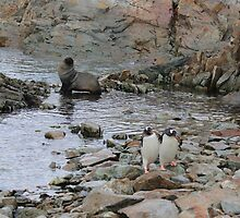 Antarctic Friends by mischif