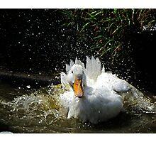 Splashing Duck Photographic Print