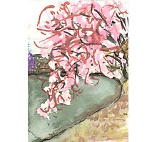 cherry blossoms over water Photographic Print
