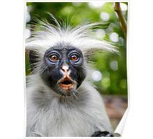 Red monkey | Zanzibar, Tanzania Poster